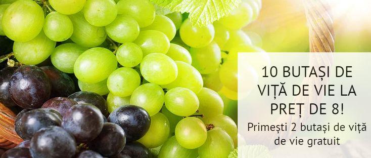 SUPER OFERTĂ!!! Îți punem la dispoziție o gamă foarte diversificată de soiuri de viță de vie, din care poți achiziționa 10 puieți, plătind doar 8! Astfel te vei convinge de recoltele bogate ale fiecărui soi ales și de deliciul fructelor. Vezi detalii aici: https://gradinamax.ro/promotii/vita-de-vie-comanzi-10-platesti-8!