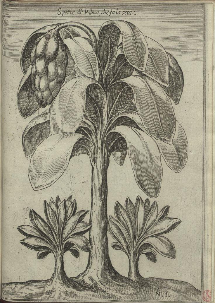 """Res. 3998 P. - 0002_new -  Filippo Pigafetta (1533-1604) – """"Relatione del Reame di Congo et delle circonuicine contrade"""". In Roma : appresso Bartolomeo Grassi, 1591. BNP RES. 3998 P."""