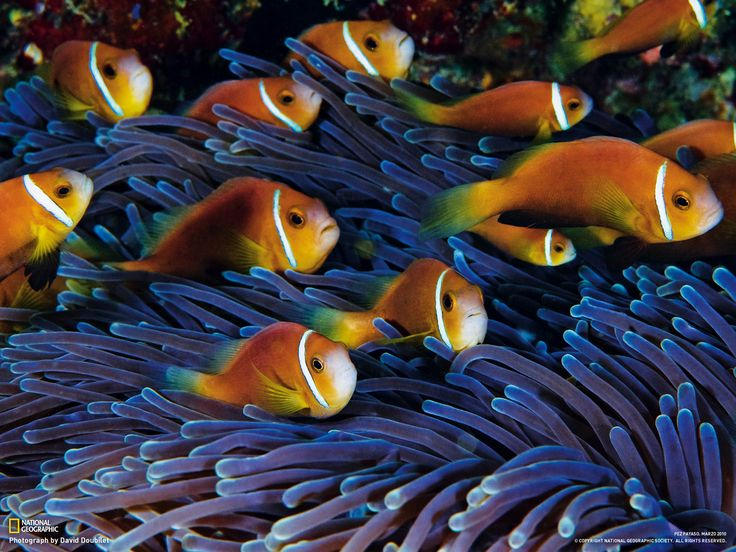 national geographic peces - Buscar con Google