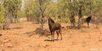 Amazing African Game Reserve for sale! Added more photos..