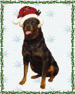 Merry #christmas #rottweiler  #kerst #hond  - #Christmas dog