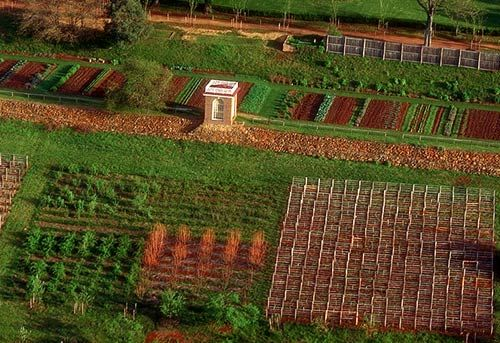 Thomas Jefferson Vegetable Garden: Google Image, Terraces Vegetables Gardens, Fall, Jefferson Gardens, Vegetables, Kitchens Gardens, Gardens Vegetables, Monticello Gardens, Gardens Terraces