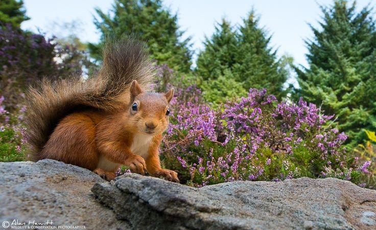 25 consigli sulla fotografia naturalistica