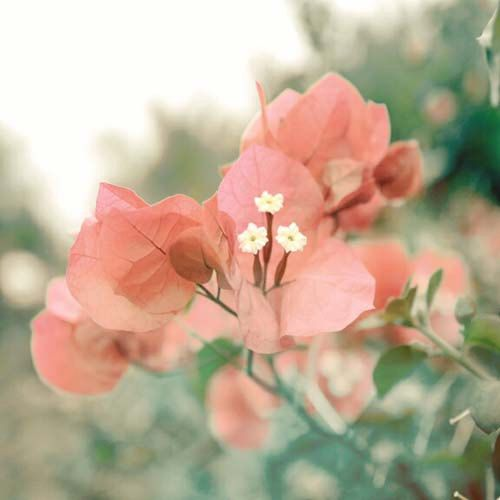 Flowers photography. Soft pink flower print, romantic - Made by Gia from $20.00. http://bit.ly/MadebyGiaNature