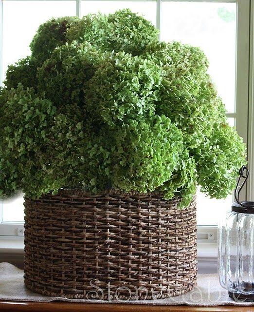 basket and green hydrangeas beautiful texture