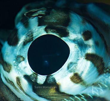Best Photography Images On Pinterest Palestine Israel Gaza - 24 detailed close ups of animal eyes