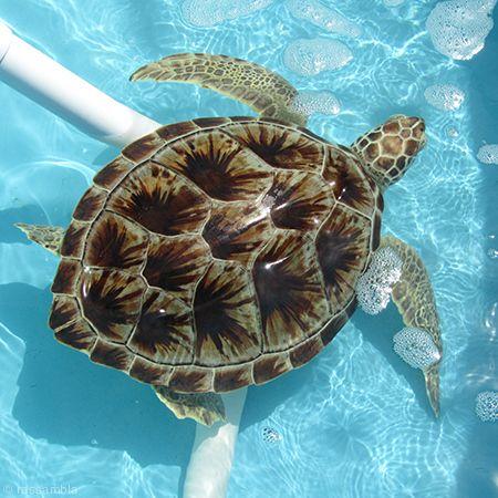 Turtle Hospital Florida Keys Marathon