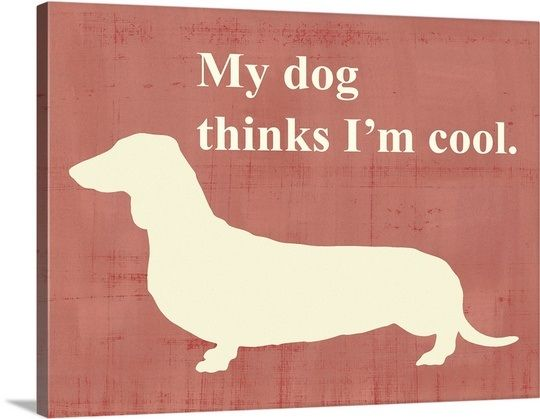 Weenie Dogs, Doxie Mama, Noodles Dogs, Flaws Dogs, Darling Dachshund ...