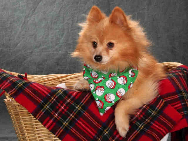 Adopt S Dog St Louis