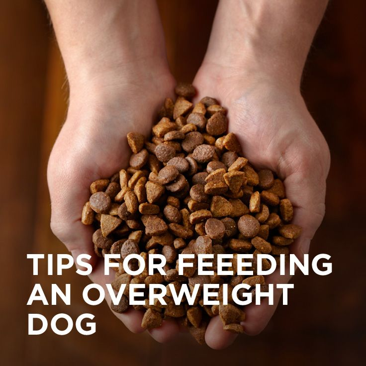 Obesity is one of the most common nutritional disorders among dogs, and it can have serious negative effects on their quality of life. The good news is, once obesity is noticed, it's relatively simple to correct.