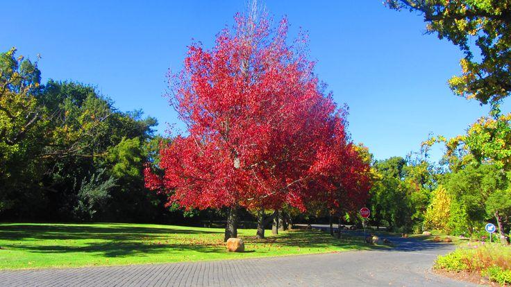 Lourensford Estate #SouthAfrica #autumn #wine