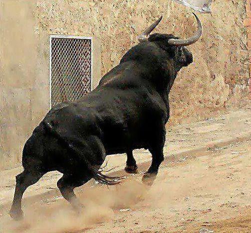 Toro Español en la Calle .