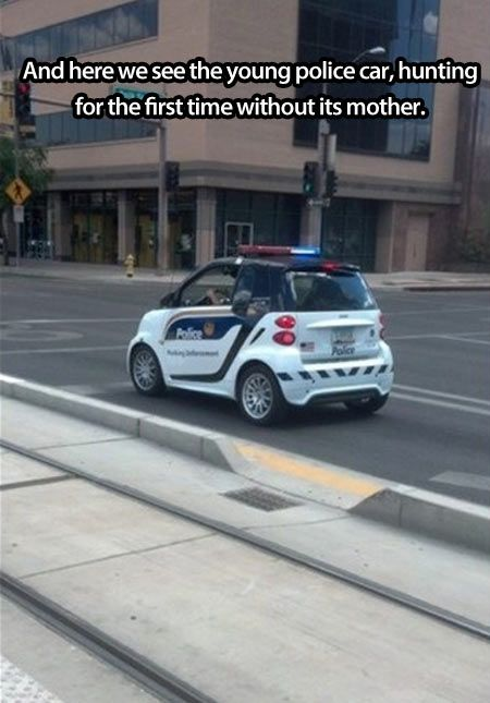Can you hear the division of labor after cop graduation? Butch, you get the Harley. Hank, you get the Mustang. Sydney, you're on bike patrol. Chad... Chad {snort, snicker, cough} you can have the Smart Car...