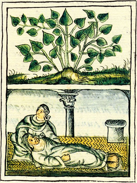 Use of 'tlatlanquaie' a shrub used to treat stomach disorders, Florentine Codex Book XI