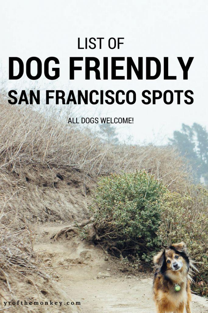 Dog Friendly San Francisco spots. Dog Friendly Travel