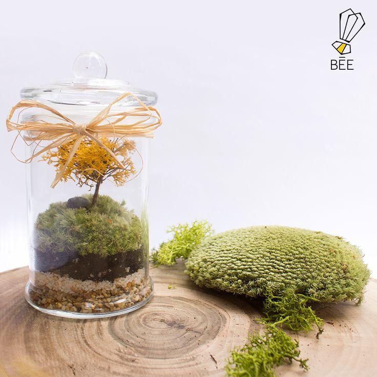 Soğuk kış günlerinde sonbaharın naturel etkisini özleyenler için... Sipariş için zeynep@beedesignandflowershop.com adresinden iletişime geçebilirsiniz.#beedesignandflowershop #art#design#decoration#glass#jar#interiordesign#indoorgardening#nature#treebowl#plant#moss#asparagus#justice#green#moss#flower#concept#handmade#yılbaşı#newyear#çiçek#tasarım#bitki#yeşil#christmas#aranjman#yeniyıl#arrangement#yosun#ornament