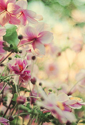 Pink & White Blooms