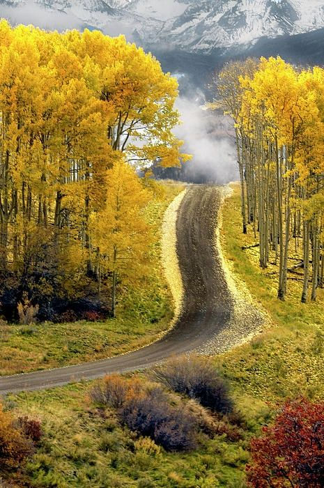 Aspen Road...Boulder Colorado - beautiful yellows, cool crisp air, love fall. If only the seasons went from spring, to summer, to fall, to spring again (I wouldn't miss the winter)