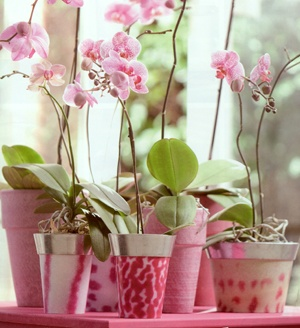 The Fine Art of Growing Orchids.Plants Can, Pink Flower, Pink Pots, Happy Orchids, Flower Pots, Pink Pink, Growing Orchids, Beautiful Orchids, Pink Orchids