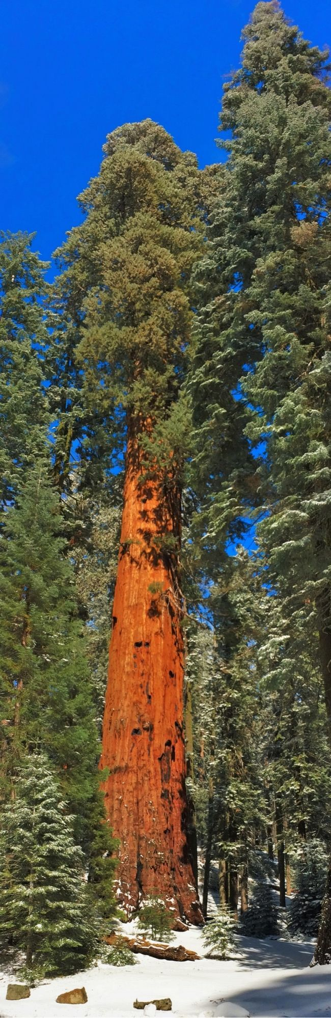 Sequoia National Park with Kids!