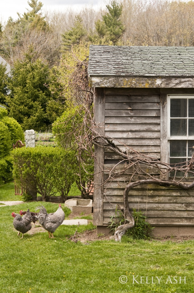 Yard chickens the country way pinterest for Old farm chicken coops