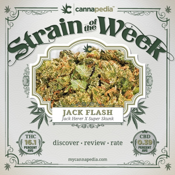 Featured Strain of the Week: Jack Flash (Jack Herer X Super Skunk) | Discover • Review • Rate: Medical Marijuana, Discover, Cannabis Strain, Week Brought, Cannabis 420, Mmj Cannabis, Http Bit Ly Zozz9L Mmj, Featured Strain