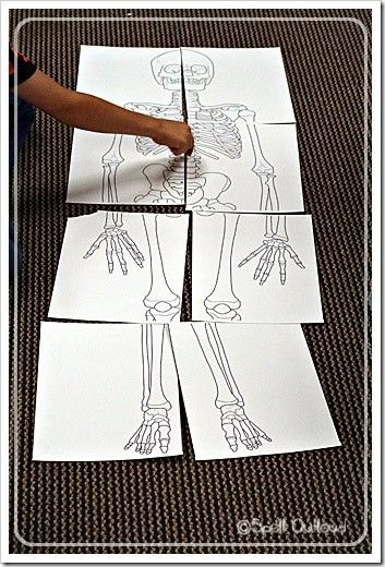 print toddler size skeleton, label and attach. I would cut out different bones and have the child stick them onto their body or your body!