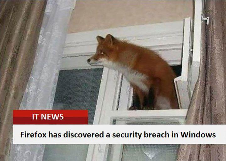funny fox bilder mit bildunterschriften