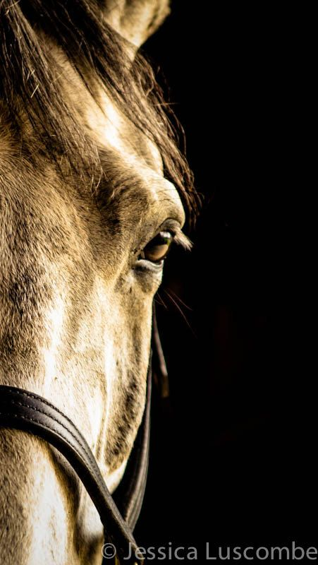 Fine Art Photograph- Equine Photography Eye of the Horse home decor rustic print
