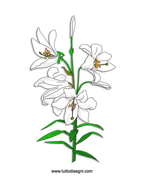 White Lilies Flower