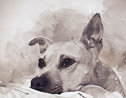 """Check out new work on my @Behance portfolio: """"My dog"""" http://be.net/gallery/57751563/My-dog"""