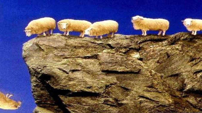 Apakah domba terlalu pintar mereka sendiri, atau apakah mereka hanya polos dan bodoh? Kami akan membiarkan Anda menjadi hakim itu setelah Anda membaca cerita ini yang aneh namun sedikit menarik.