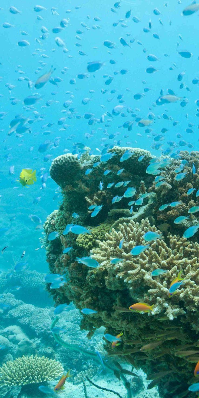 Snorkelling and Scuba Diving in Tanzania with Original Travel. #scubadivingdestinations