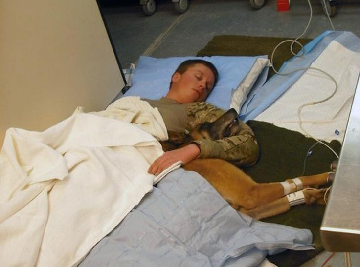 Navy Petty Officer 2nd Class Ryan Lee, master at arms, and Petty Officer 1st Class Valdo, working dog, sleep on a hospital floor in Kandahar. Valdo and Lee both were wounded by shrapnel in a rocket propelled grenade attach in Bala Murghab District, Badghis Province, on April 4, 2011. Both Lee and Valdo were awarded Purple Heart medals. Valdo fully recovered after five surgeries, served another year, then retired and now lives with Lee in New Jersey.