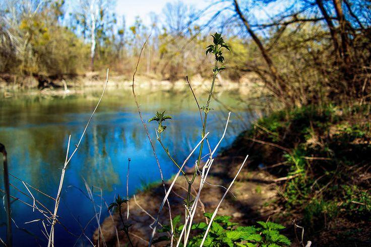 Ébredés...Long-erdő természetvédelmi terület,Sárospatak környékén...