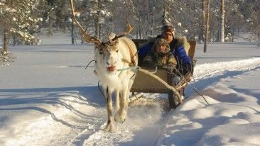 The reindeer is an icon of Finnish Lapland, and sleigh rides are a great way of experiencing the Arctic wilderness.