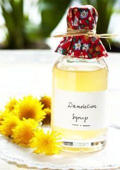 Sirop de Păpădie (Mierea de Păpădie) – Reţetă Maria Treben