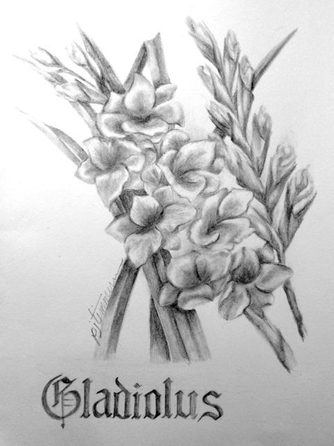 17 best images about flowers drawing of gladioli on pinterest coloring pastel paintings and. Black Bedroom Furniture Sets. Home Design Ideas