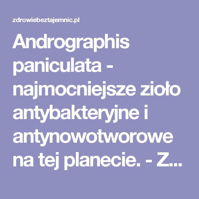 Andrographis paniculata - najmocniejsze zioło antybakteryjne i antynowotworowe na tej planecie. - Zdrowiebeztajemnic.pl