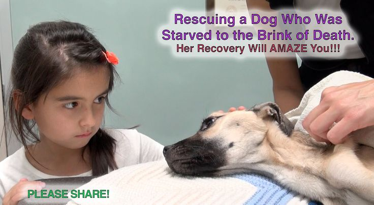 Rescuing a Dog Who Was Starved to the Brink of Death -  Little Girl Stares into The Eyes of a Dying Dog. What Follows Seconds Later? A Miracle.