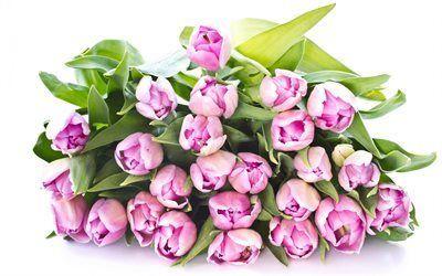 Scarica sfondi tulipani, spring bouquet, tulipani rosa, bouquet visione, rose giardino del paradiso