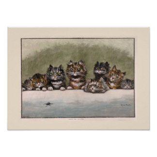 Brown et chatons tigrés gris affiche