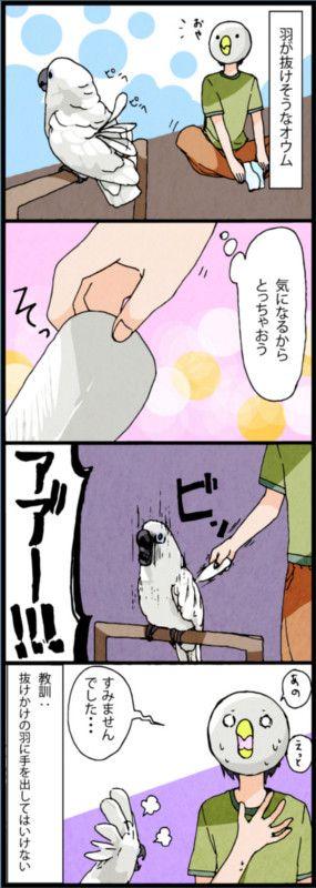 漫画「いたずらオウムの生活雑記」 (1) オウム「ああー!!」   マイナビニュース