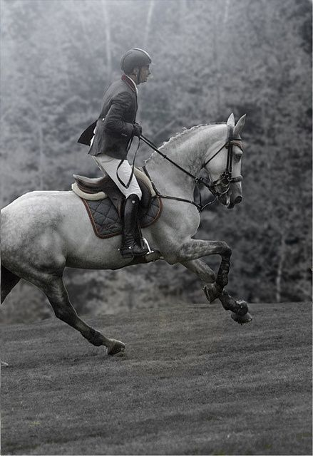 Horse riding is probably one of the most elegant sports there is.. Beautiful shot