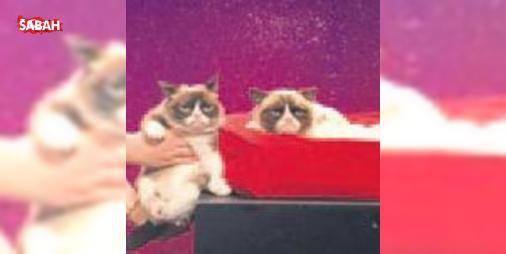 Heykeli yapıldı yine de huysuz : Gerçek ismi Tardar Sauce olan ancak asık yüz ifadesi nedeniyle Huysuz Kedi olarak dünyaca üne kavuşan kedi artık ölümsüz. ABDnin başkenti Washington D.C.deki Madame Tussauds Müzesinde Huysuz Kedinin...  http://ift.tt/2dI6dkJ #Magazin   #Huysuz #Kedi #kedi #üne #artık
