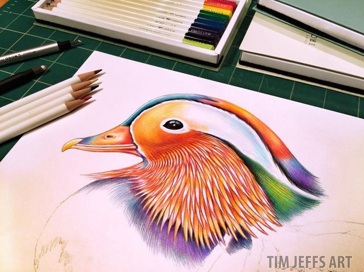 More Mandarin! moving along on my colorful duck! Drawn with @TombowUSA Irojiten colored pencils, Woodlands Dictionary Set.
