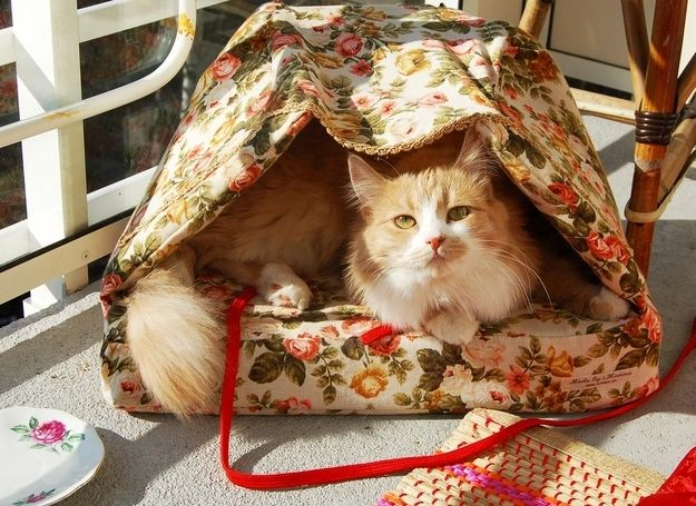 Cat Basket   33 Totally Do-Able D.I.Y. Projects For Your Pets