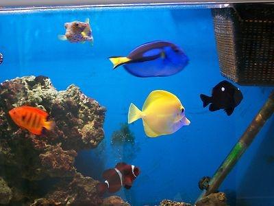 marine 4ft fish tank