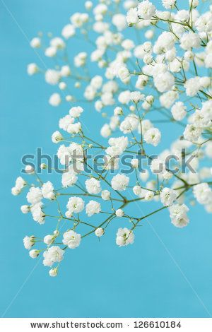 Gypsophila (Baby's-breath flowers), light, airy masses of small white flowers. by Melica, via Shutterstock