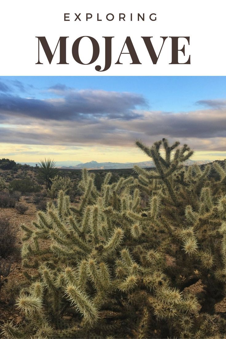 A combination of Joshua Tree & Death Valley, Mojave Natural Preserve in California is worth checking out on your next visit.